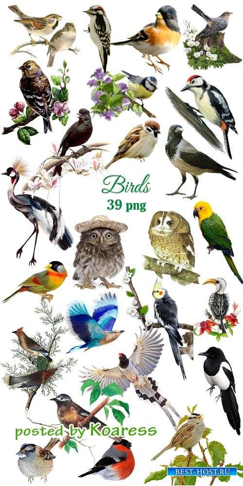 Птицы клипарт png - Birds png clip art