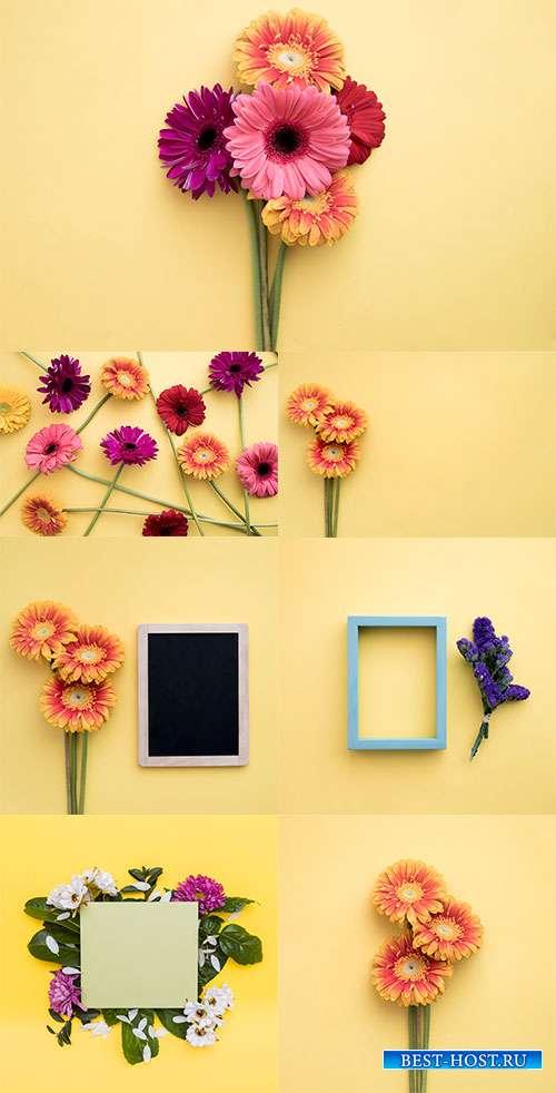 Цветы на жёлтом фоне с рамками - Растровый клипарт