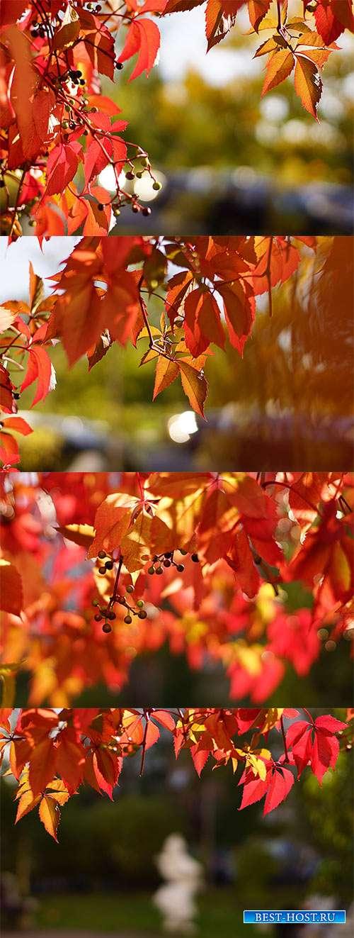 Рассыпает осень золото повсюду - Осенние фоны