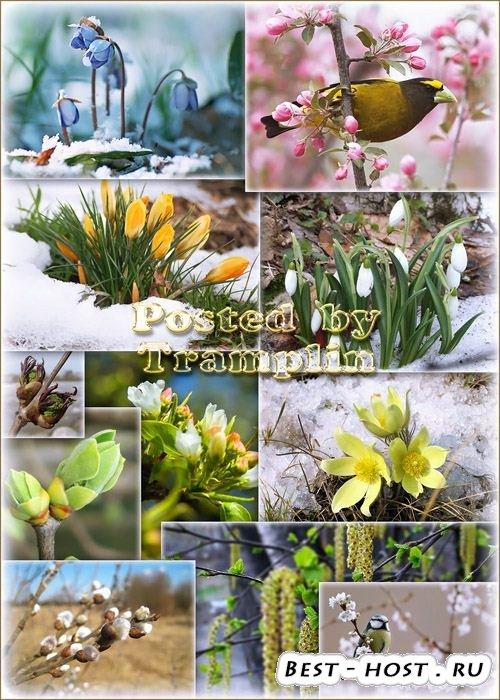 Картинки клипарты фоны на тему весны.  Природа расцветает - Цветение весны