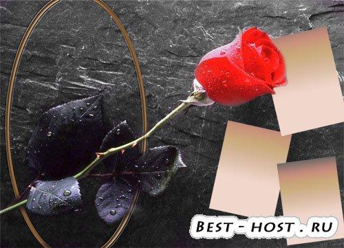 Рамка для фото - Прекрасная роза