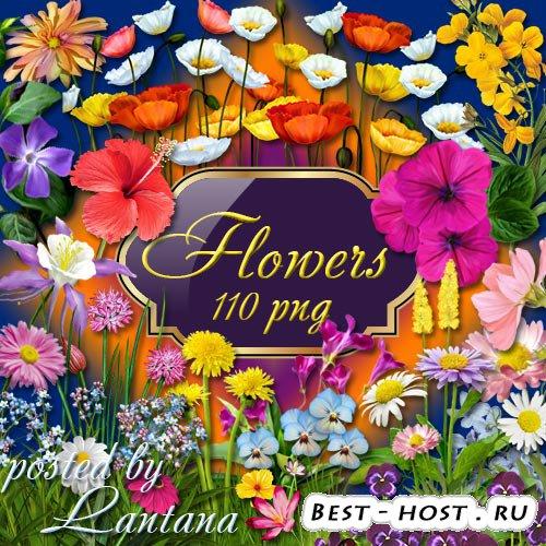 Клипарт - Люблю цветы в начале мая и, чтоб цвели они всю жизнь