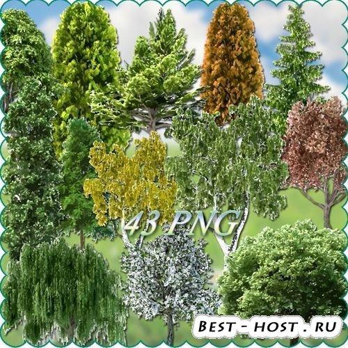 Клипарт деревья на прозрачном фоне