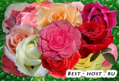 Клипарт Майские розы и их слёзы