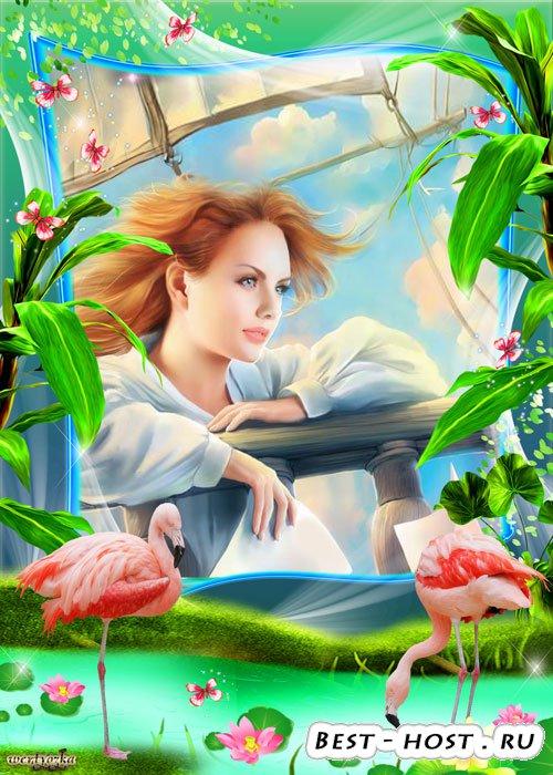Многослойная морская psd рамка - Прекрасные нежно-розовые фламинго