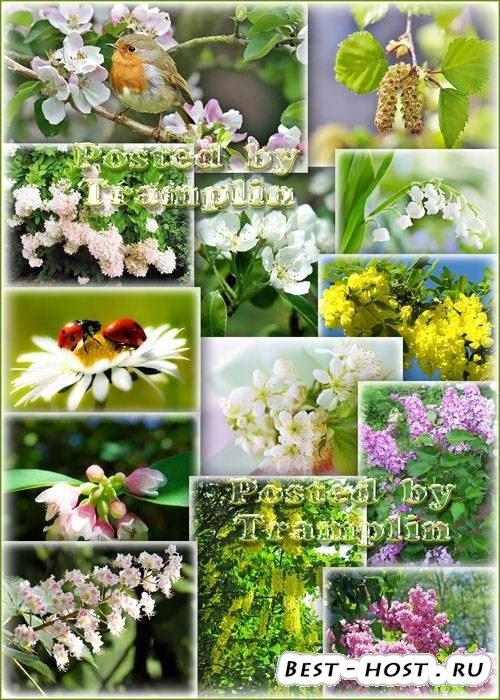 Весна цветёт - Снег лепестков, На листьях праздничный наряд
