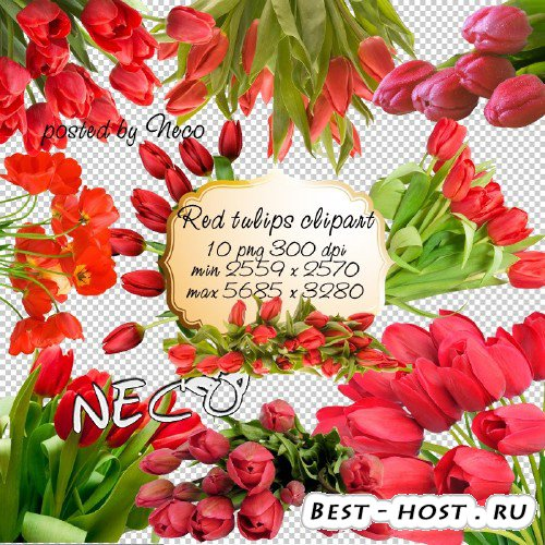 Red Tulips clipart - Клипарт красные тюльпаны PNG