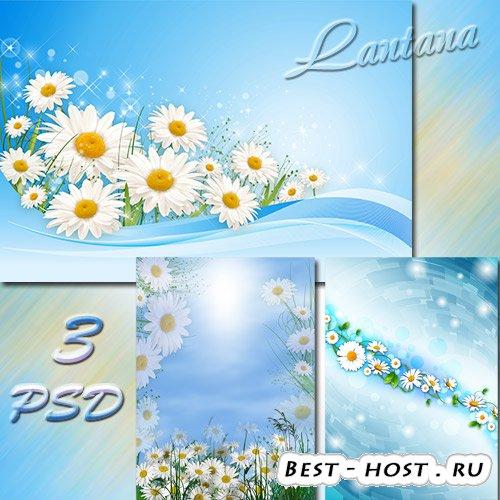 PSD исходники - Знакомые с детства родные ромашки