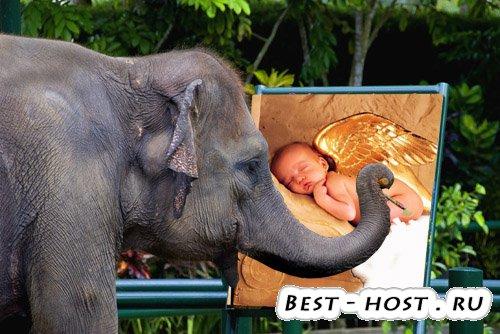 Рамка для фото - слон рисует картину
