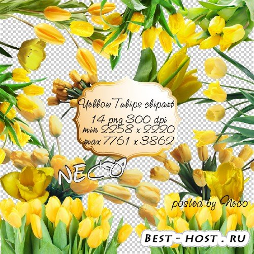 Yellow Tulips clipart - Клипарт жёлтые тюльпаны PNG