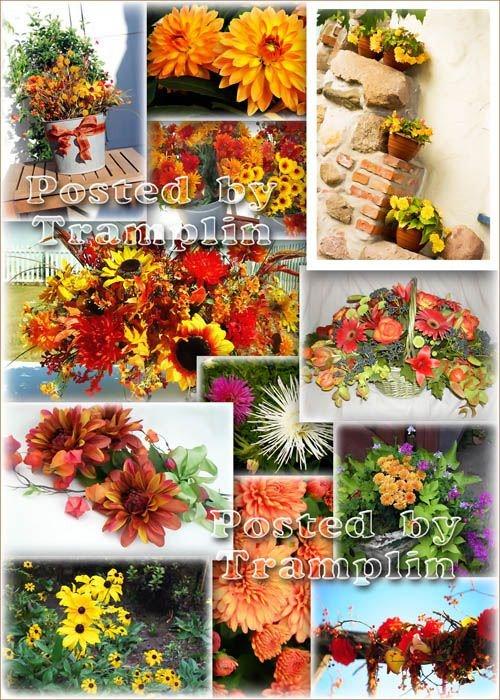 Цветы Осеннего Колера