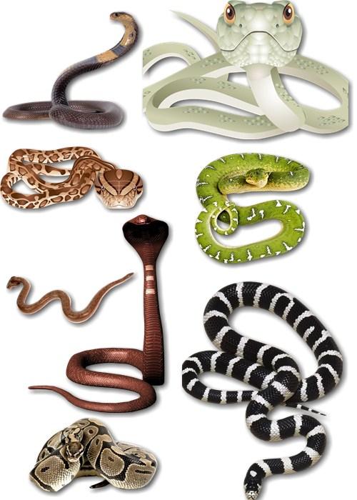 Клипарт - Змеи ползучие