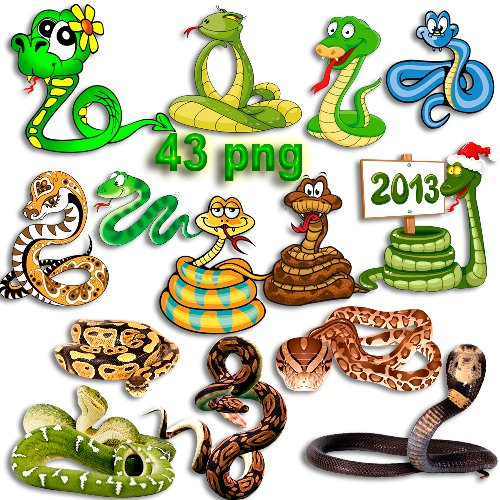 Png клипарт - Змеи и змейки