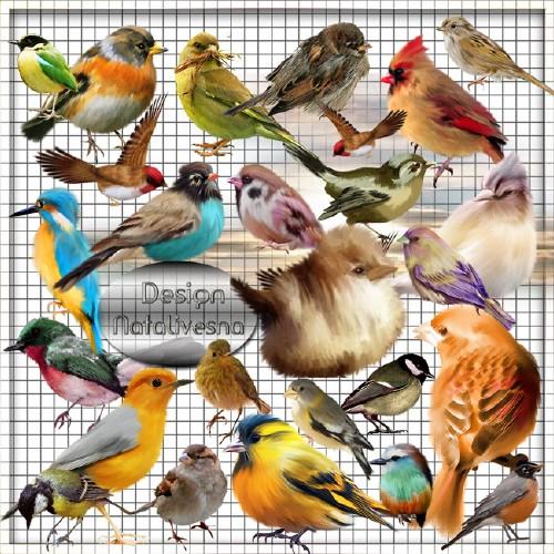 Клипарт в PNG – Разноцветные  птички …