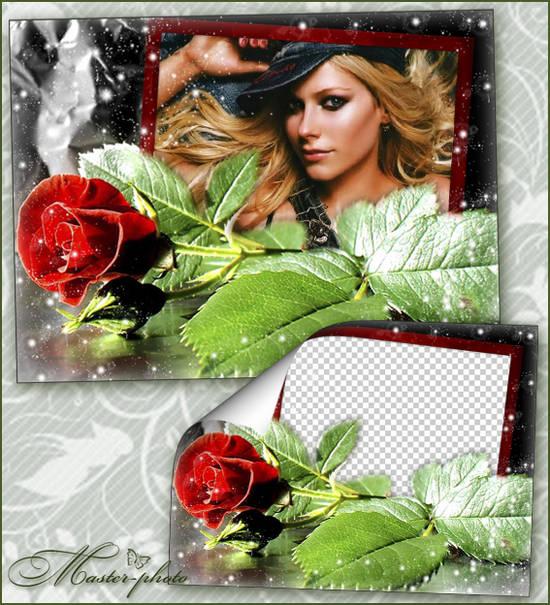 Рамка с розой для фотошопа - Одинокий цветок