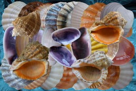 Клипарт Перламутровые подарки Черного моря