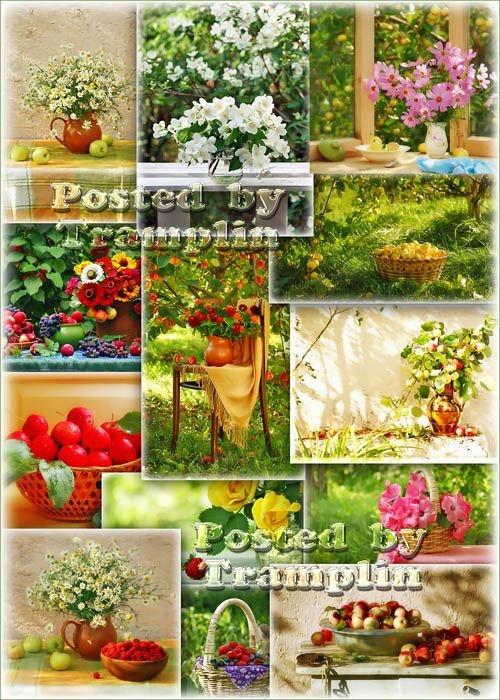 Клипарт – Цветы, яблоки, яблоневый цвет