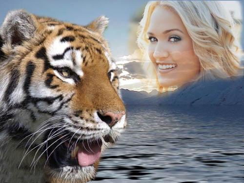 Рамка для фотошопа - красивый тигр