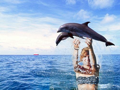 Рамка для фото - дельфины в море