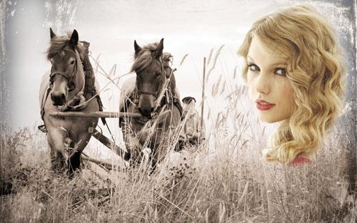Рамка для фотошопа - лошади в поле