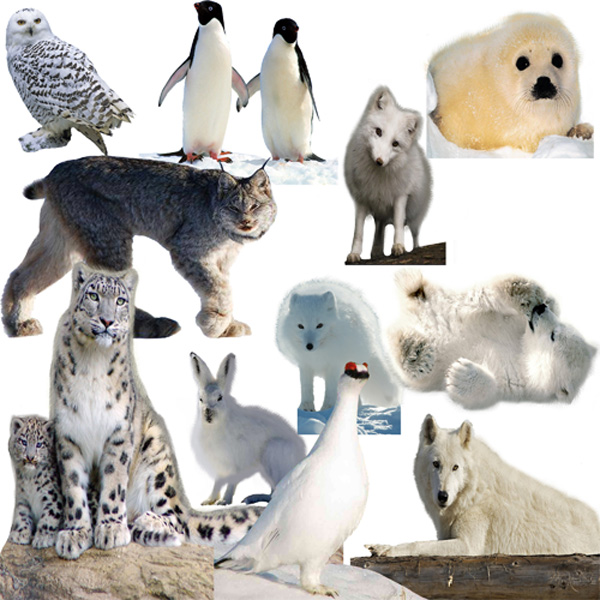 Клипарт - Полярные животные и птицы