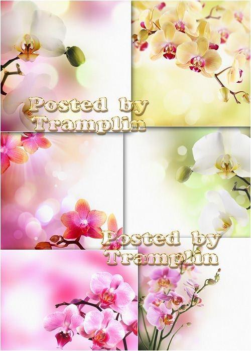 Прекрасные орхидеи - Beautiful orchids