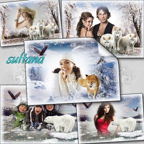 Три зимние рамки для фото с дикими животными