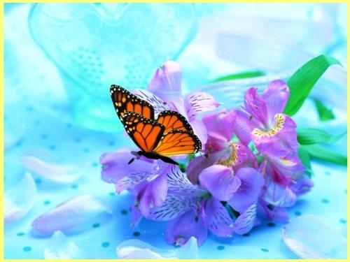 Анимированный фон с бабочкой