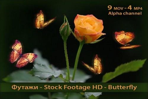 Футажи с альфаканалом - Бабочки - Butterflies