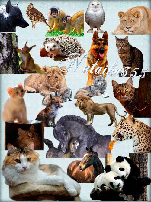 Клипарт на прозрачном фоне - Животный мир такой прекрасный