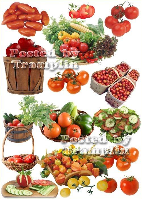 Клипарт – Помидоры, томаты на белом фоне