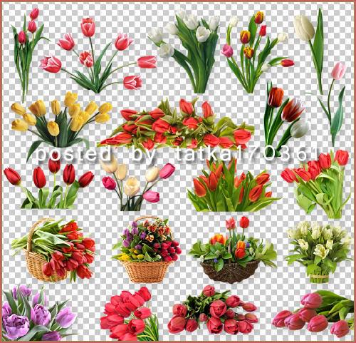 Цветочный клипарт для фотошопа - Весенние тюльпаны