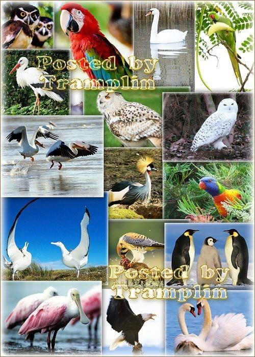 Коллекция изображений Животный мир - Птицы