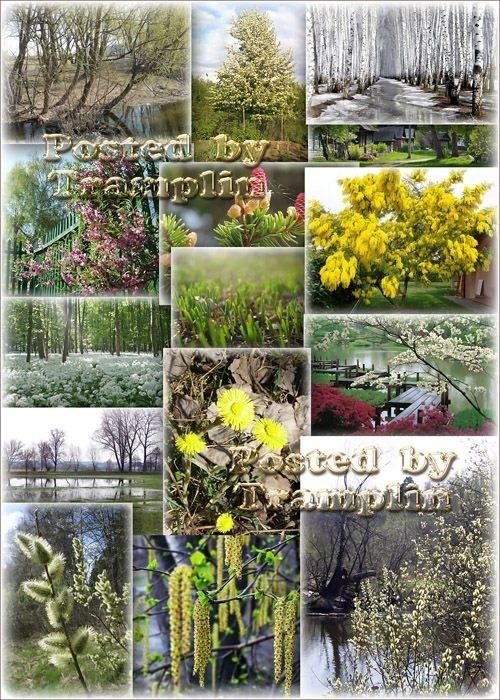Весенний фото клипарт – Деревья распускаются, природа расцветает