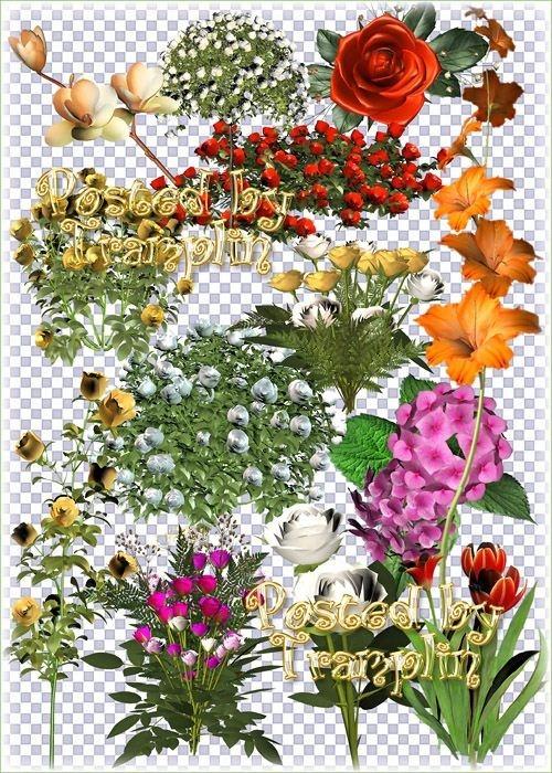Большой Сборник цветов в 3D – Розы, тюльпаны, лилии, гортензии, Гладиолусы
