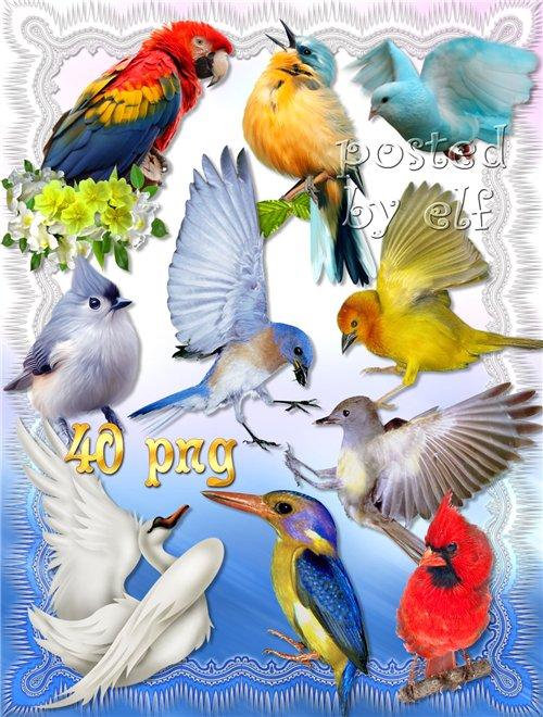 Красивые птицы на прозрачном фоне