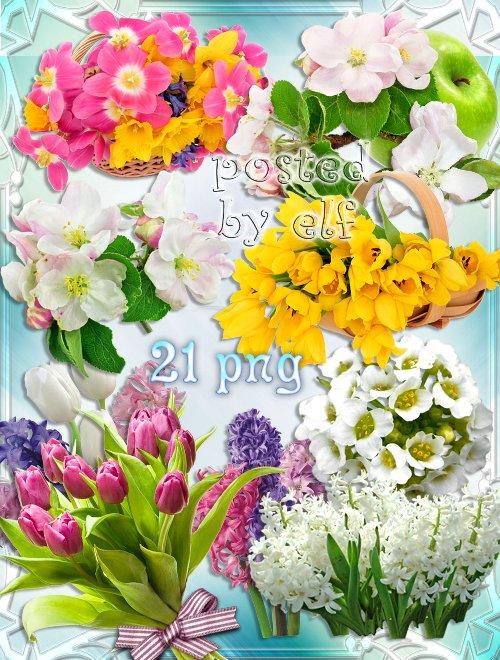 Яблоневый цвет, гиацинты, тюльпаны на прозрачном фоне