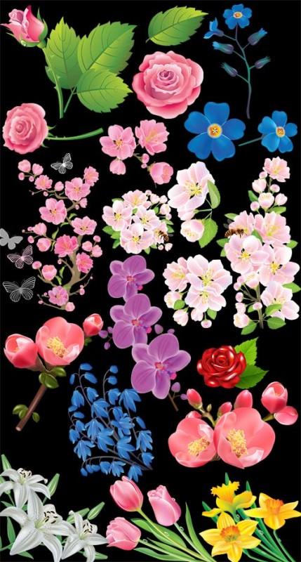 Клипарт - расцветающие веточки яблонь тюльпаны розы и другие прозрачный фон