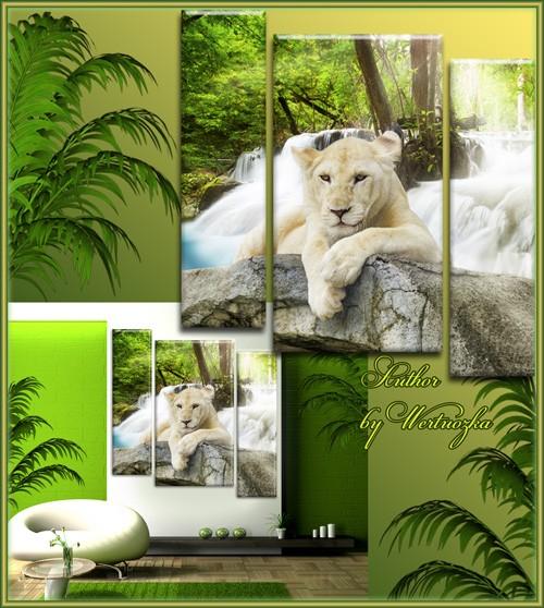 Белый лев, царь зверей, хищник семейства кошачьих - Триптих в psd формате