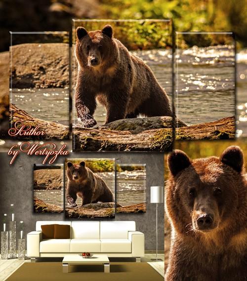 Триптих в psd формате - Медведь на речке