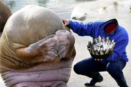 Шаблон для photoshop - рыбка для моржа
