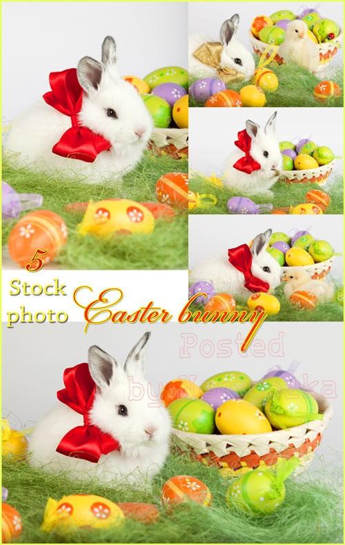 Пасха, пасхальный кролик, пасхальные яйца, цыпленок - растровый клипарт