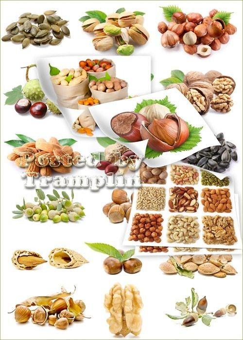 Растровый клипарт  -  Орехи, семечки, фисташки, листочки, миндаль, желуди