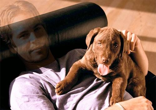 Шаблон для фотошопа - Фото с симпатичной собачкой