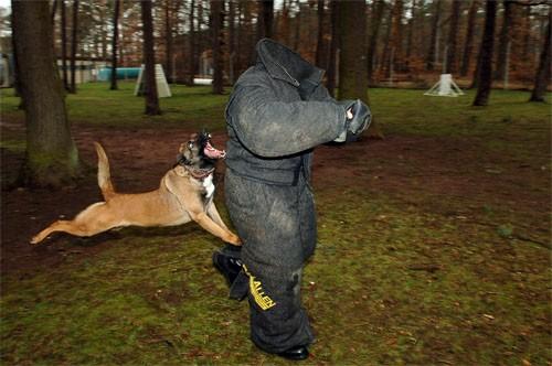Шаблон для фото - Кинолог и гневная собака