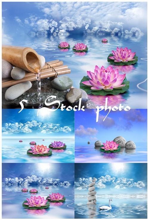Лотос, бамбук, лебедь, спа камни, вода - растровый клипарт