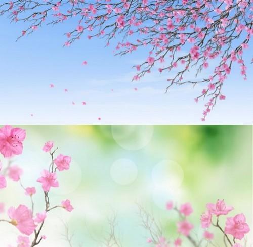 Футажи - Ветки сакуры