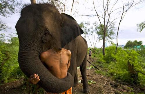 Шаблон для фото - Вместе с добрым слоном