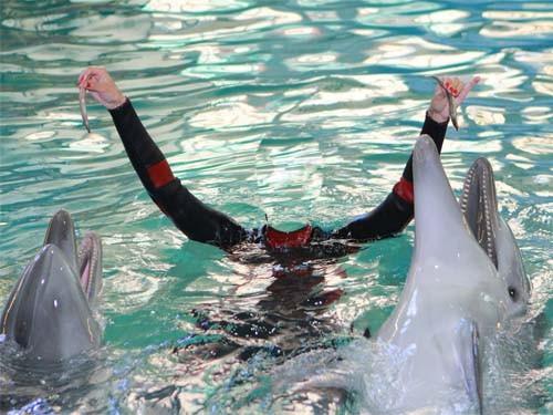Шаблон для девушек - Милые дельфины