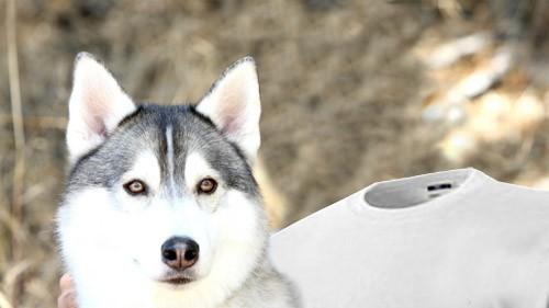 Шаблон для фото - Фотография с диким волком